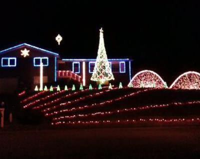Lights On Dogwood